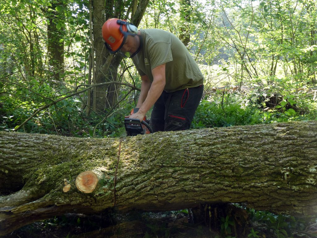 Sustainable Forestry and Woodland Management - MJO Forestry Ltd